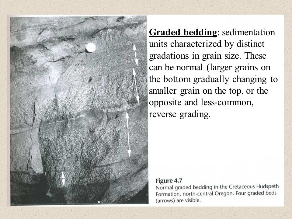 Graded bedding: sedimentation units characterized by distinct gradations in grain size. These can be normal (larger grains on the bottom gradually cha