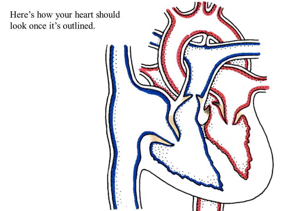 Heres how your heart should look once its outlined.
