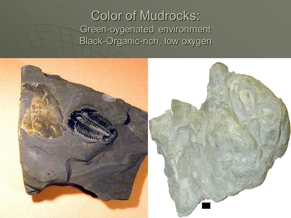 Color of Mudrocks: Green-oygenated environment Black-Organic-rich, low oxygen