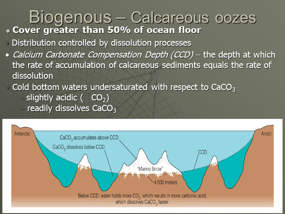 Biogenous – Calcareous oozes Cover greater than 50% of ocean floor Cover greater than 50% of ocean floor Distribution controlled by dissolution processes Distribution controlled by dissolution processes Cold bottom waters undersaturated with respect to CaCO 3 Cold bottom waters undersaturated with respect to CaCO 3 – slightly acidic ( CO 2 ) – readily dissolves CaCO 3 Calcium Carbonate Compensation Depth (CCD) – the depth at which the rate of accumulation of calcareous sediments equals the rate of dissolutionCalcium Carbonate Compensation Depth (CCD) – the depth at which the rate of accumulation of calcareous sediments equals the rate of dissolution