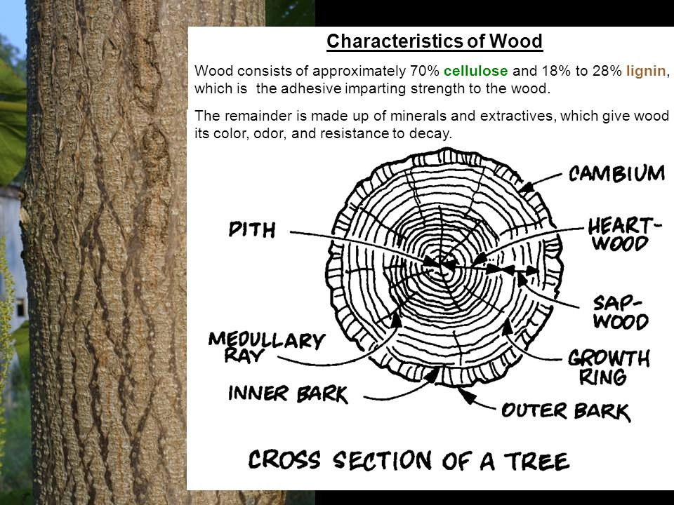 Characteristics of Wood Wood consists of approximately 70% cellulose and 18% to 28% lignin, which is the adhesive imparting strength to the wood. The