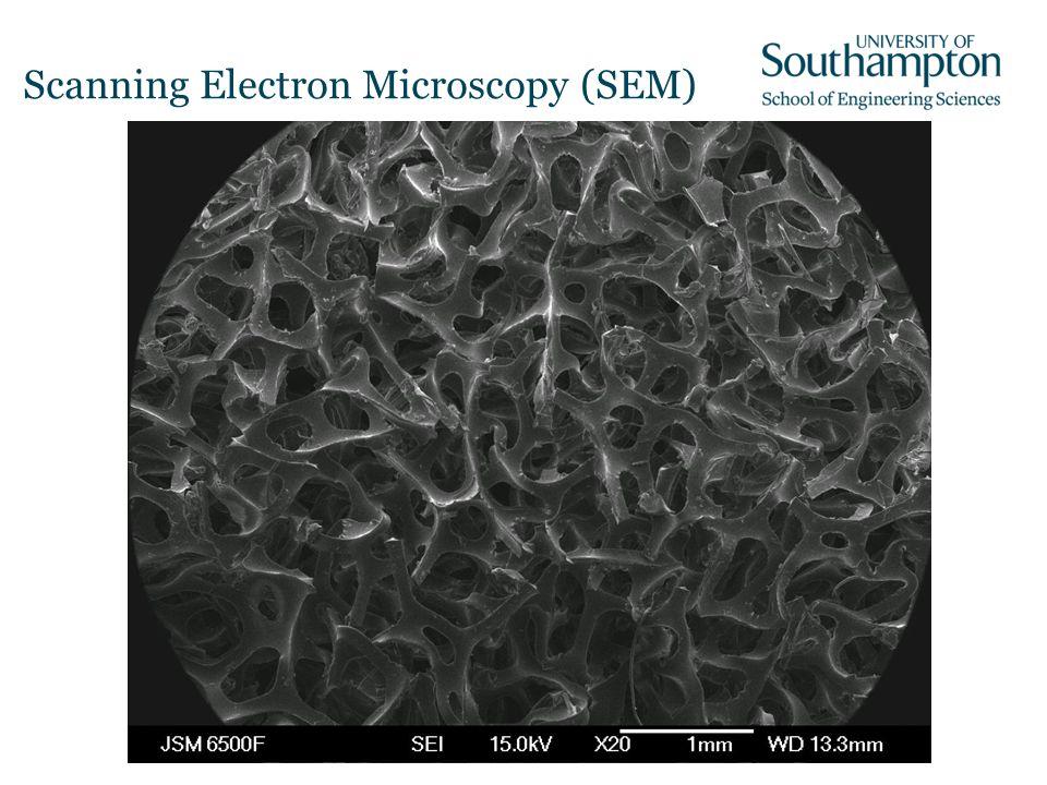 Scanning Electron Microscopy (SEM)