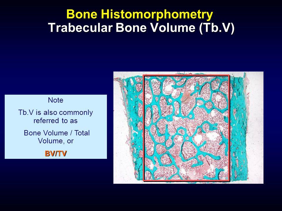 Bone Histomorphometry Trabecular Bone Volume (Tb.V) Note Tb.V is also commonly referred to as Bone Volume / Total Volume, orBV/TV