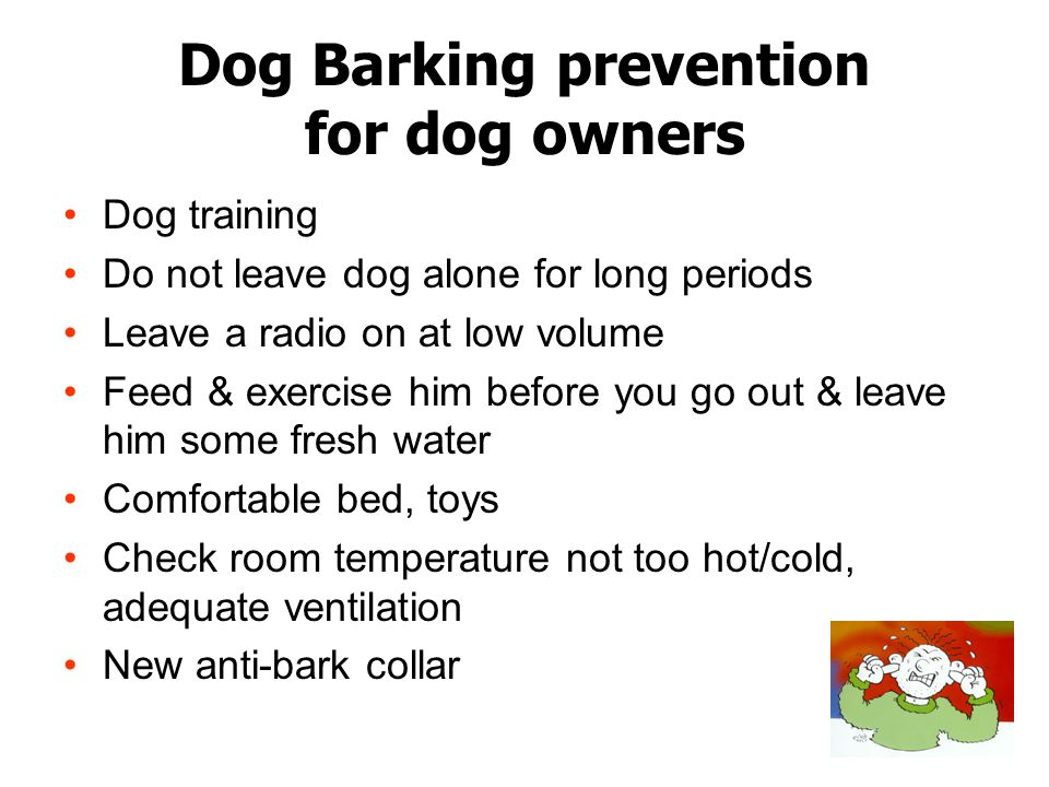Dog Barking prevention for dog owners Dog training Do not leave dog alone for long periods Leave a radio on at low volume Feed & exercise him before you go out & leave him some fresh water Comfortable bed, toys Check room temperature not too hot/cold, adequate ventilation New anti-bark collar