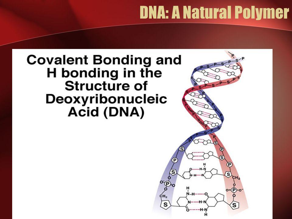 DNA: A Natural Polymer
