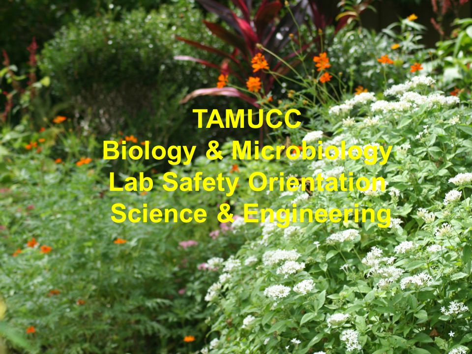 TAMUCC Biology & Microbiology Lab Safety Orientation Science & Engineering