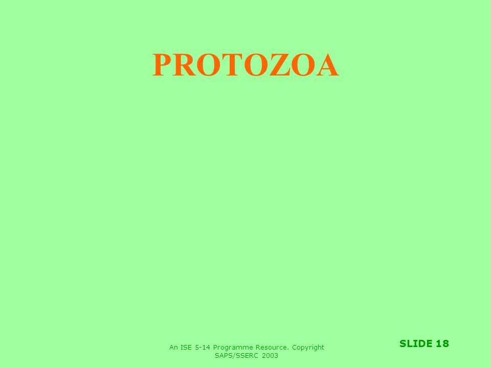 An ISE 5-14 Programme Resource. Copyright SAPS/SSERC 2003 SLIDE 18 PROTOZOA