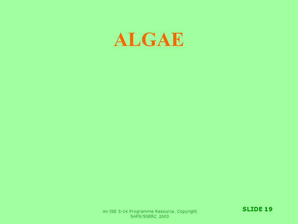 An ISE 5-14 Programme Resource. Copyright SAPS/SSERC 2003 SLIDE 19 ALGAE