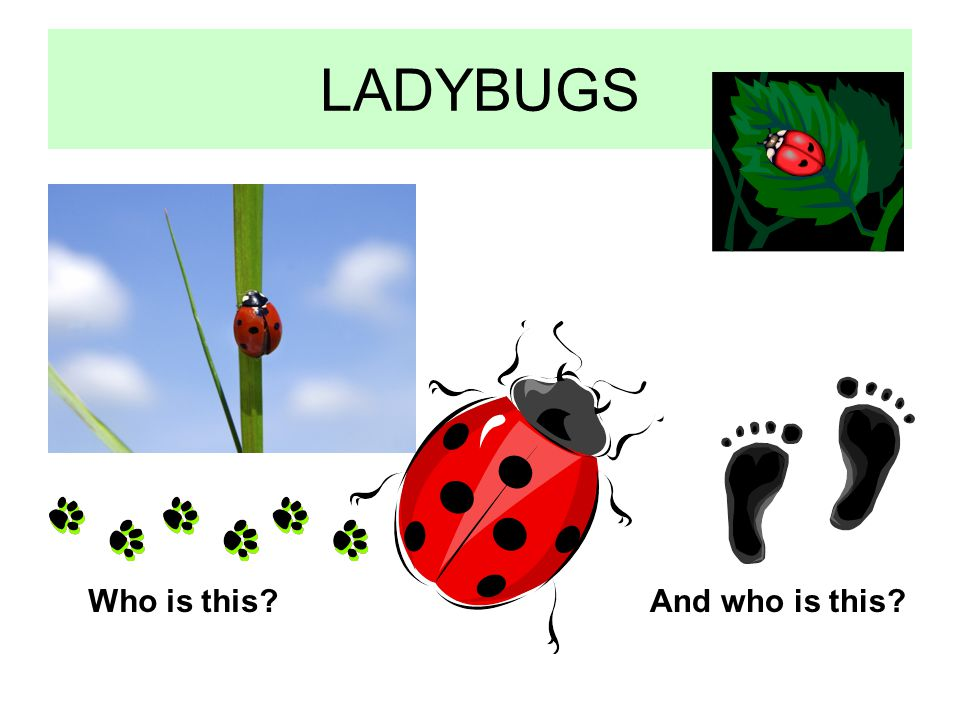 LADYBUGS Who is this And who is this