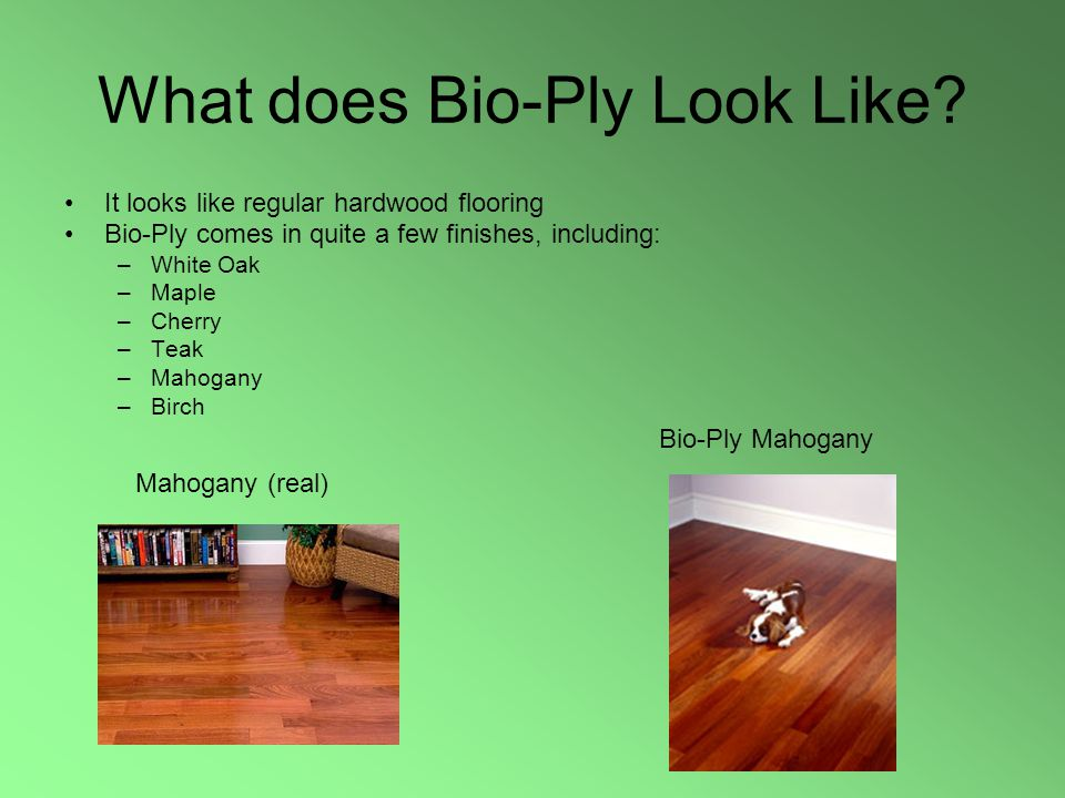 What does Bio-Ply Look Like.
