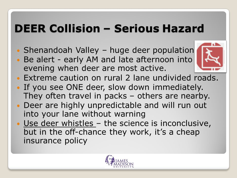DEER Collision – Serious Hazard Shenandoah Valley – huge deer population.