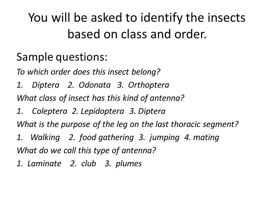 You will be asked to identify the insects based on class and order.