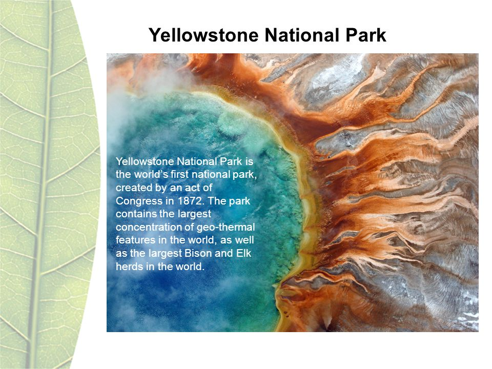 Yellowstone National Park is the worlds first national park, created by an act of Congress in 1872. The park contains the largest concentration of geo