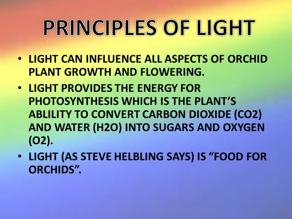 LIGHT CAN INFLUENCE ALL ASPECTS OF ORCHID PLANT GROWTH AND FLOWERING.