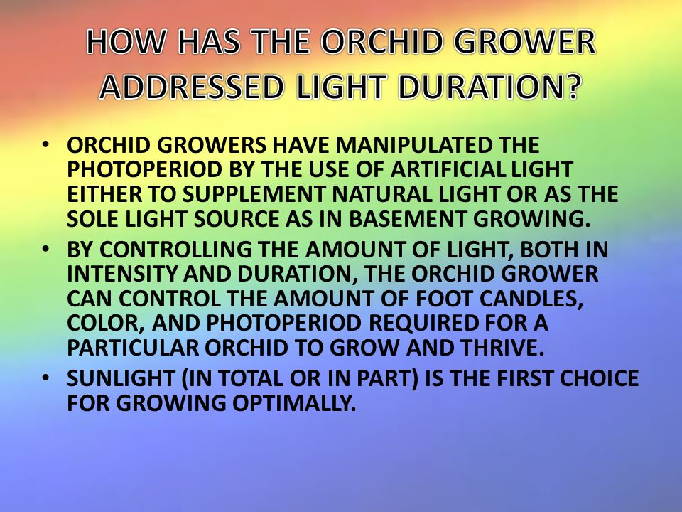 ORCHID GROWERS HAVE MANIPULATED THE PHOTOPERIOD BY THE USE OF ARTIFICIAL LIGHT EITHER TO SUPPLEMENT NATURAL LIGHT OR AS THE SOLE LIGHT SOURCE AS IN BASEMENT GROWING.