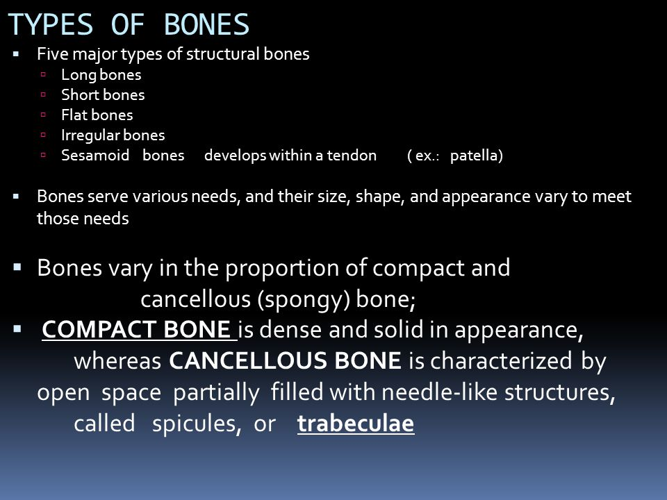 GLOSSARY OF TERMS: SKELETAL SYSTEM Term: Definition (with one example): analagous to geographic terms such as peak mount hill cape bluff isle cove condyle a rounded process that articulates with another bone eg.