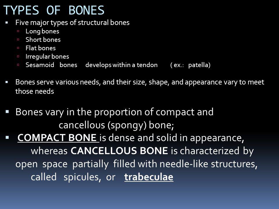 Most of the bones of the skull are flat bones