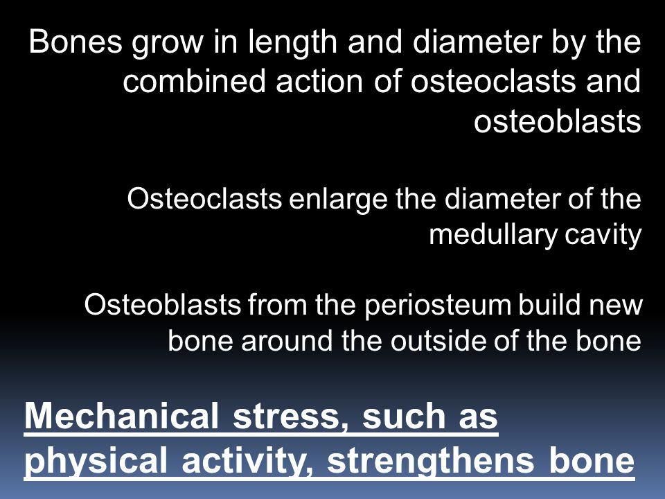 Bones grow in length and diameter by the combined action of osteoclasts and osteoblasts Osteoclasts enlarge the diameter of the medullary cavity Osteo