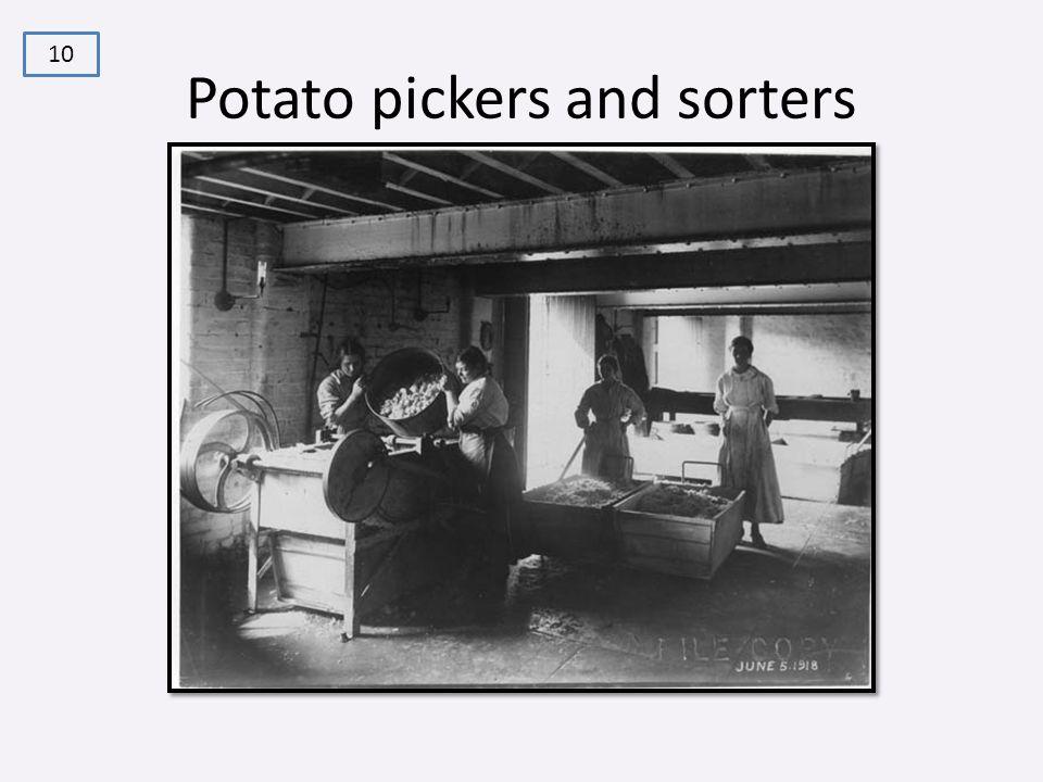 Potato pickers and sorters 10