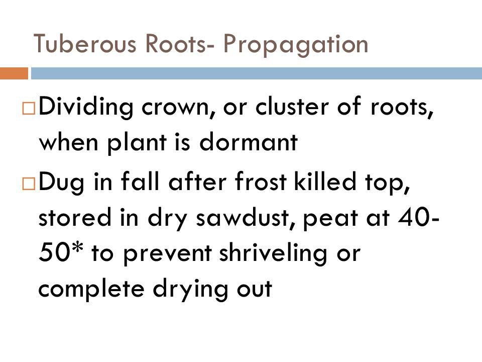 Tuberous Roots- Propagation Dividing crown, or cluster of roots, when plant is dormant Dug in fall after frost killed top, stored in dry sawdust, peat