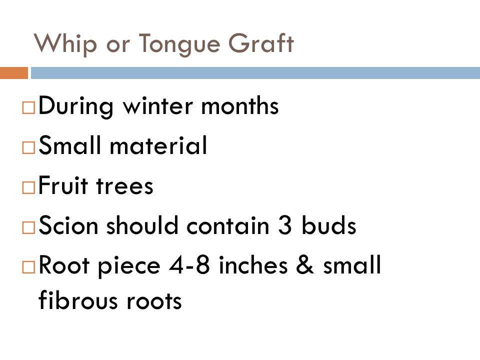 Whip or Tongue Graft During winter months Small material Fruit trees Scion should contain 3 buds Root piece 4-8 inches & small fibrous roots