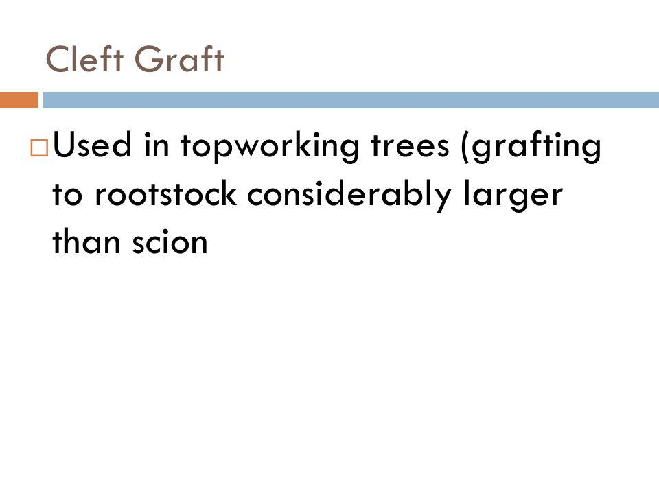 Cleft Graft Used in topworking trees (grafting to rootstock considerably larger than scion
