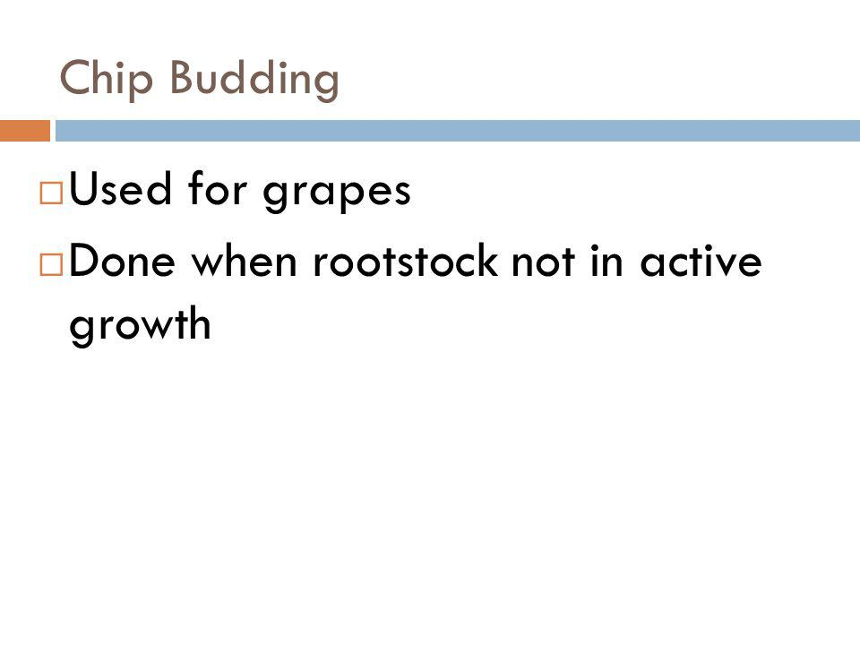 Chip Budding Used for grapes Done when rootstock not in active growth