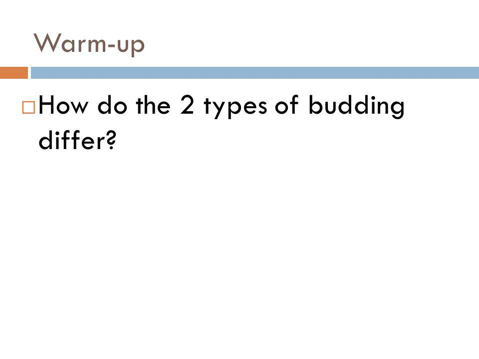 Warm-up How do the 2 types of budding differ?