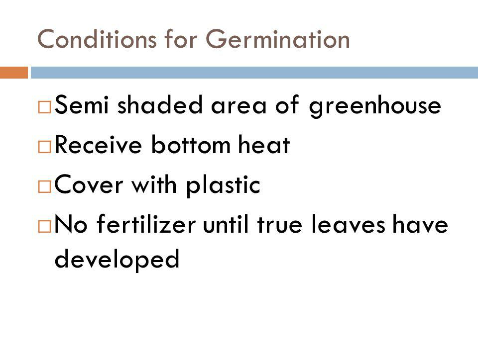 Conditions for Germination Semi shaded area of greenhouse Receive bottom heat Cover with plastic No fertilizer until true leaves have developed