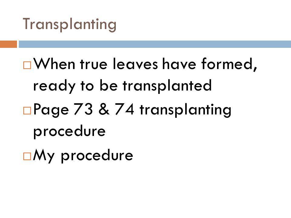 Transplanting When true leaves have formed, ready to be transplanted Page 73 & 74 transplanting procedure My procedure