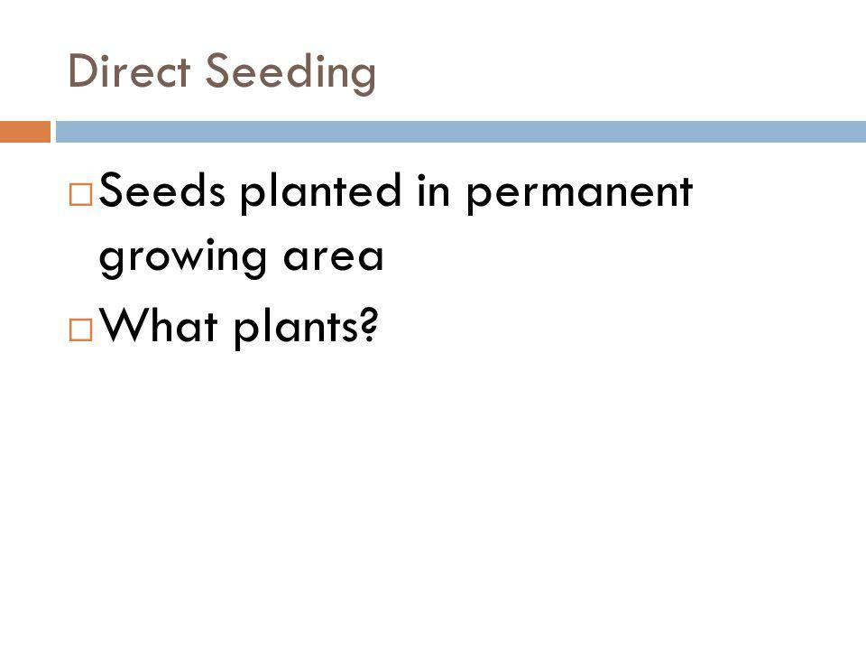 Direct Seeding Seeds planted in permanent growing area What plants?