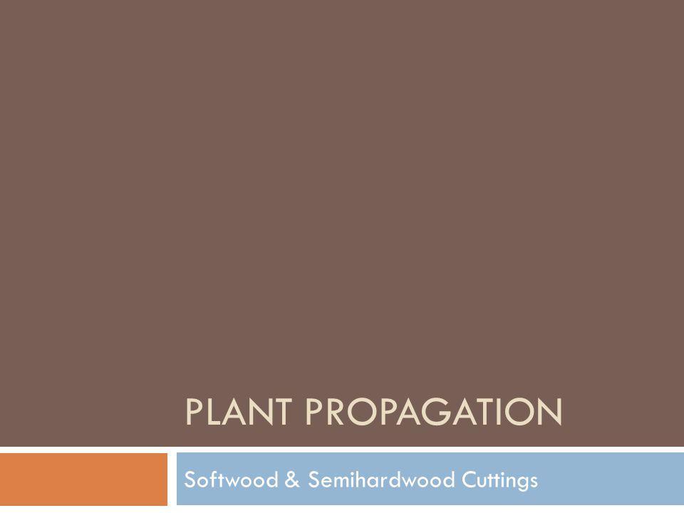 PLANT PROPAGATION Softwood & Semihardwood Cuttings