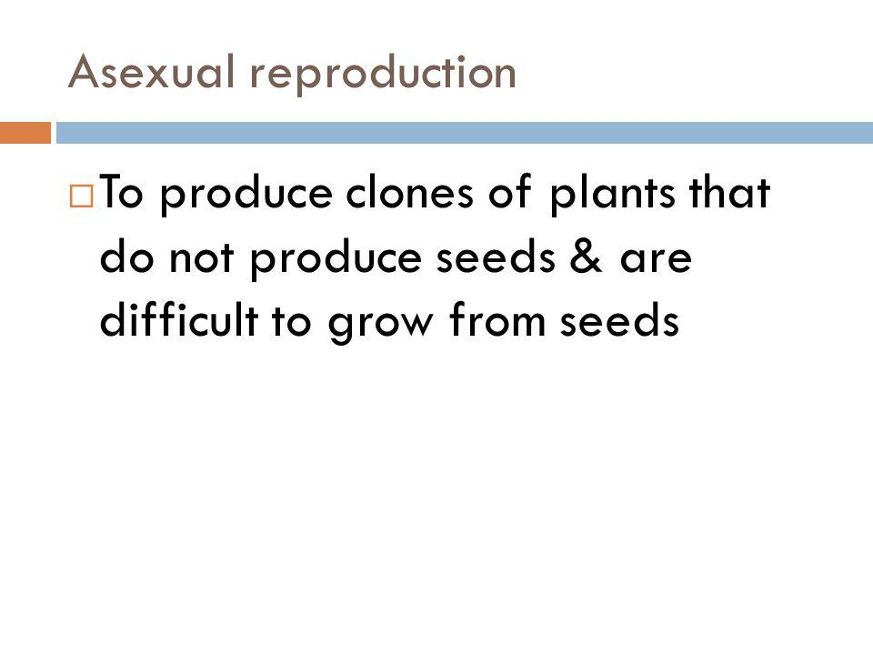 Asexual reproduction To produce clones of plants that do not produce seeds & are difficult to grow from seeds