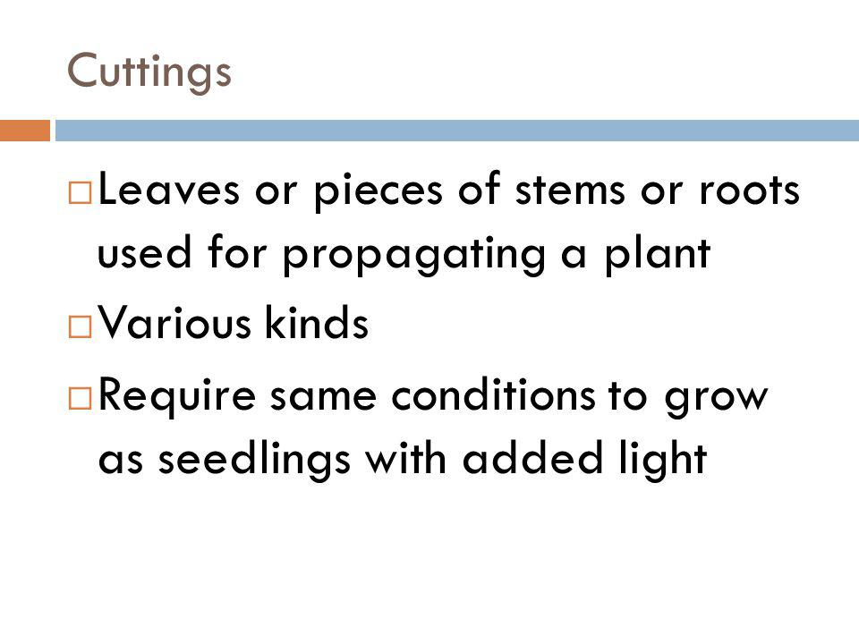 Cuttings Leaves or pieces of stems or roots used for propagating a plant Various kinds Require same conditions to grow as seedlings with added light