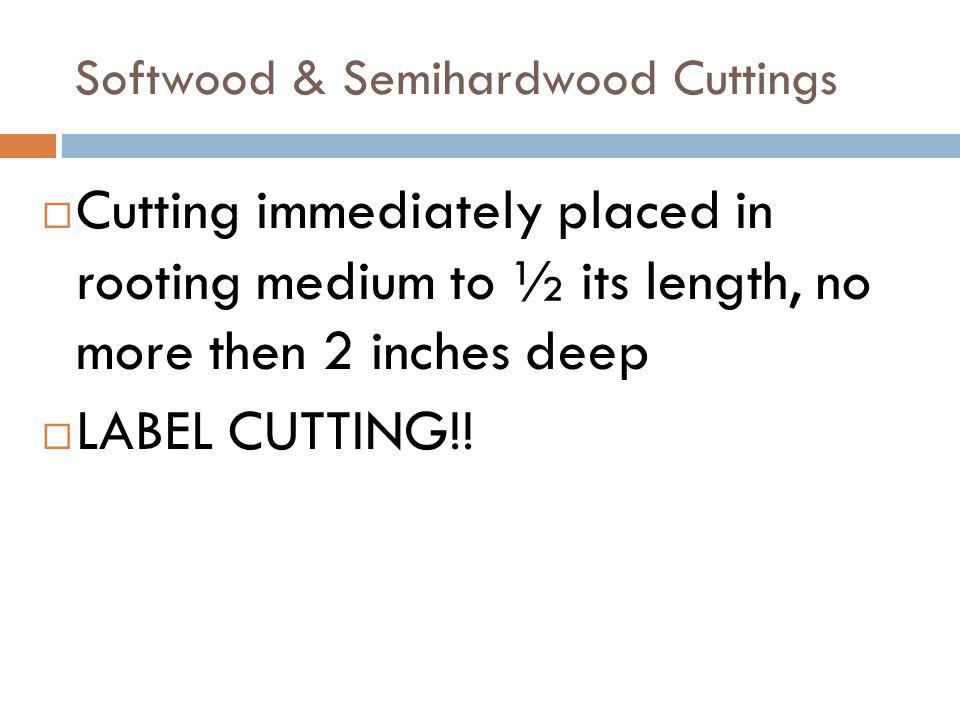 Softwood & Semihardwood Cuttings Cutting immediately placed in rooting medium to ½ its length, no more then 2 inches deep LABEL CUTTING!!