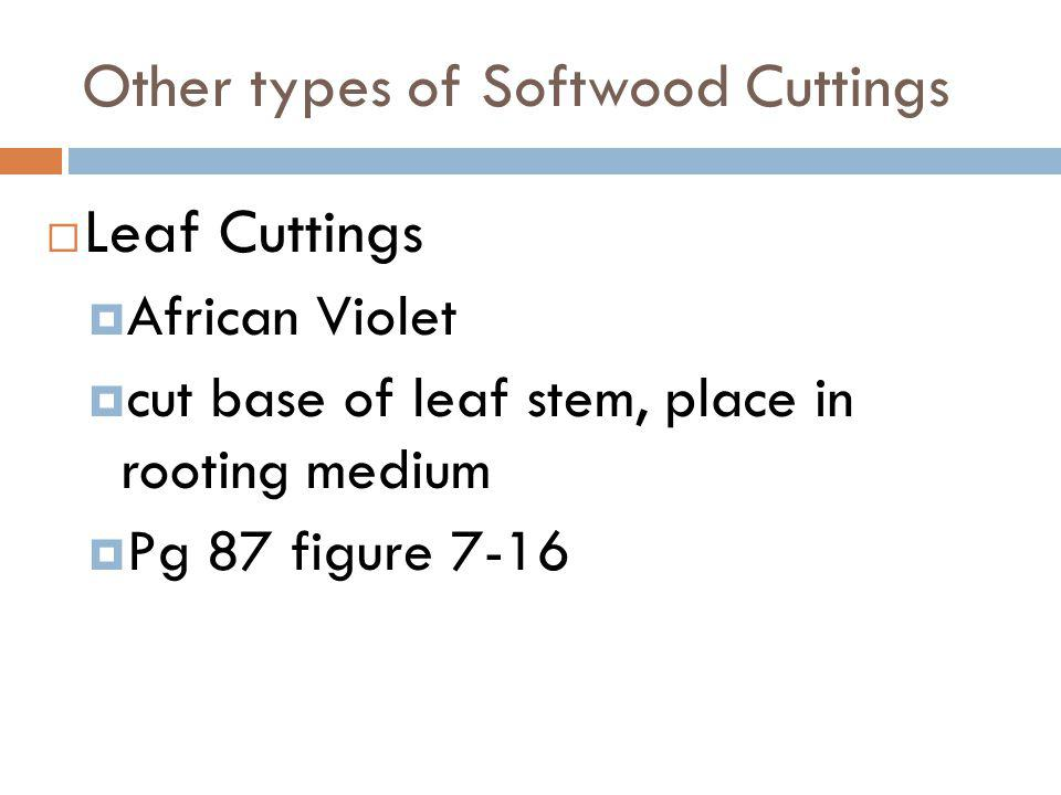 Other types of Softwood Cuttings Leaf Cuttings African Violet cut base of leaf stem, place in rooting medium Pg 87 figure 7-16
