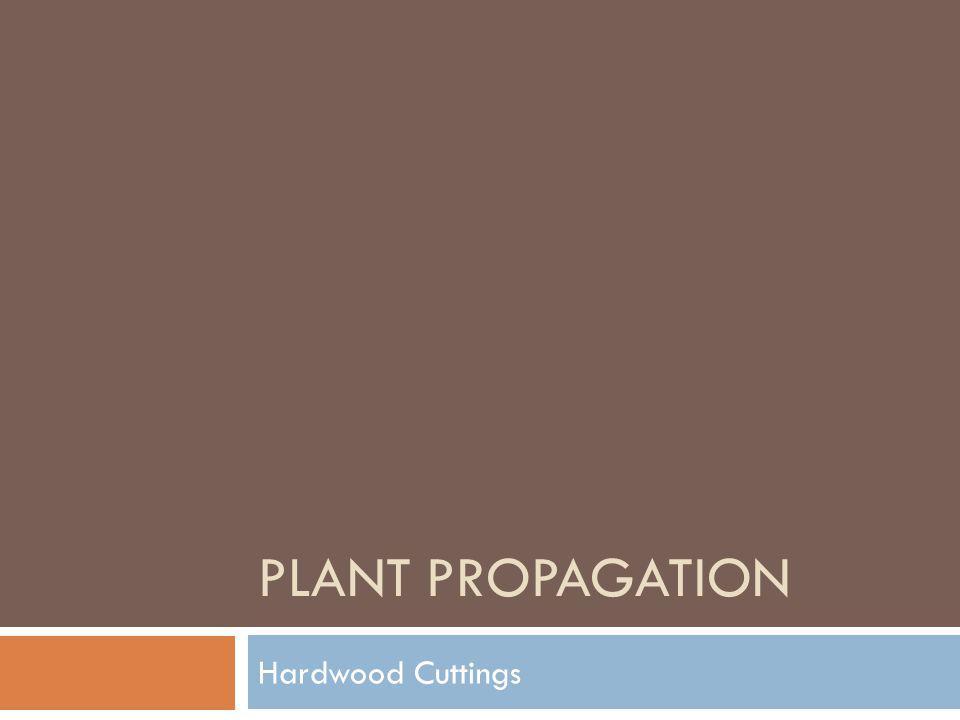 PLANT PROPAGATION Hardwood Cuttings