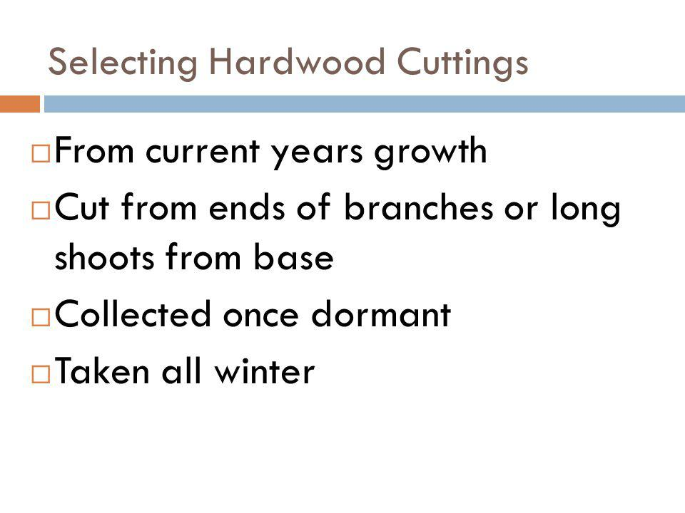 Selecting Hardwood Cuttings From current years growth Cut from ends of branches or long shoots from base Collected once dormant Taken all winter