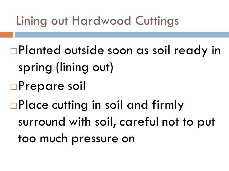 Lining out Hardwood Cuttings Planted outside soon as soil ready in spring (lining out) Prepare soil Place cutting in soil and firmly surround with soi