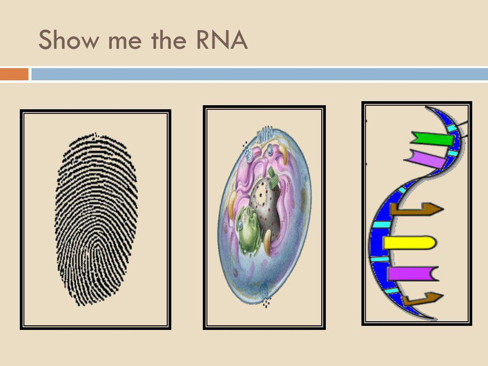 Show me the DNA