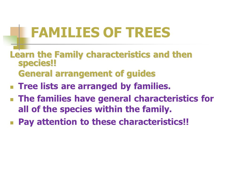FAMILIES OF TREES Learn the Family characteristics and then species!.