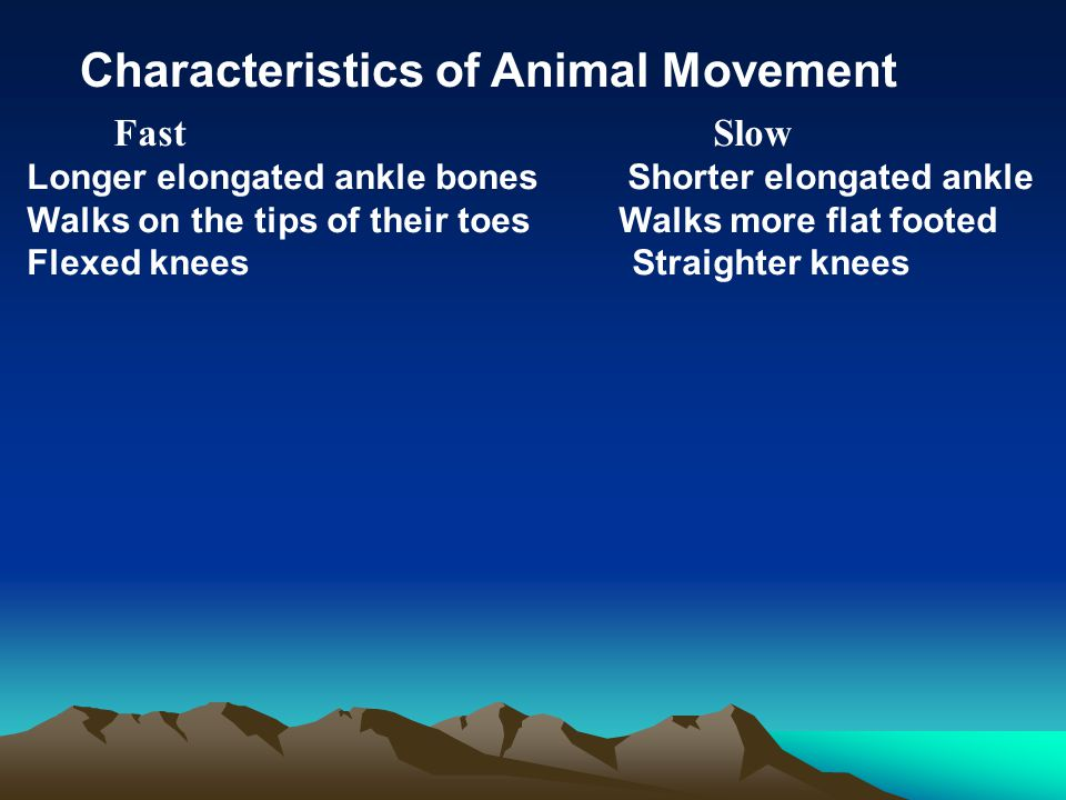 Characteristics of Animal Movement Fast Slow Longer elongated ankle bones Shorter elongated ankle Walks on the tips of their toes Walks more flat foot