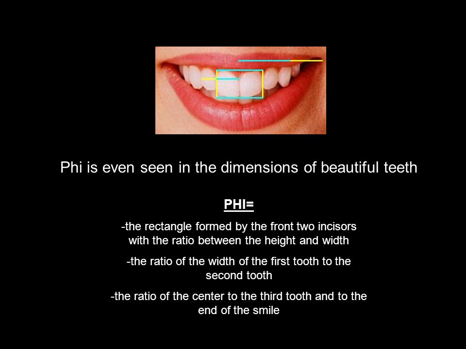 Phi is even seen in the dimensions of beautiful teeth PHI= -the rectangle formed by the front two incisors with the ratio between the height and width