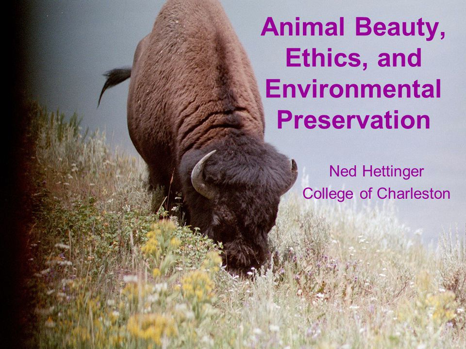 Animal Beauty, Ethics, and Environmental Preservation Ned Hettinger College of Charleston