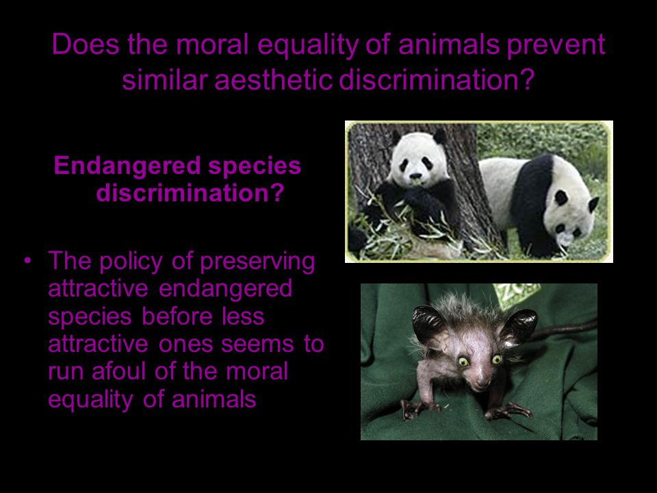 Does the moral equality of animals prevent similar aesthetic discrimination.