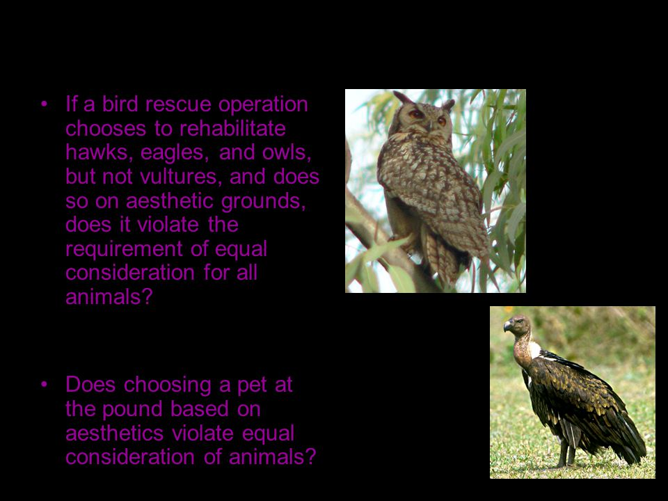 If a bird rescue operation chooses to rehabilitate hawks, eagles, and owls, but not vultures, and does so on aesthetic grounds, does it violate the requirement of equal consideration for all animals.