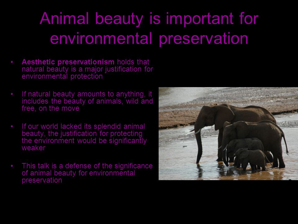 Animal beauty is important for environmental preservation Aesthetic preservationism holds that natural beauty is a major justification for environmental protection If natural beauty amounts to anything, it includes the beauty of animals, wild and free, on the move If our world lacked its splendid animal beauty, the justification for protecting the environment would be significantly weaker This talk is a defense of the significance of animal beauty for environmental preservation