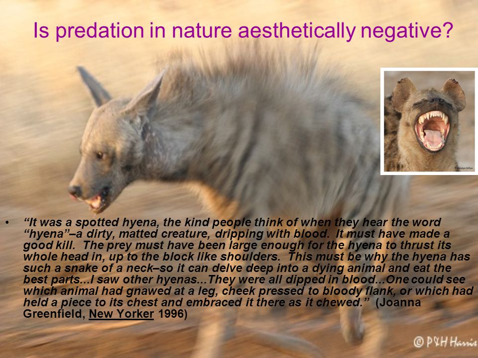 Is predation in nature aesthetically negative.