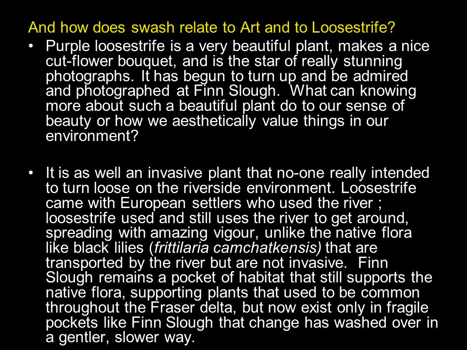 And how does swash relate to Art and to Loosestrife.