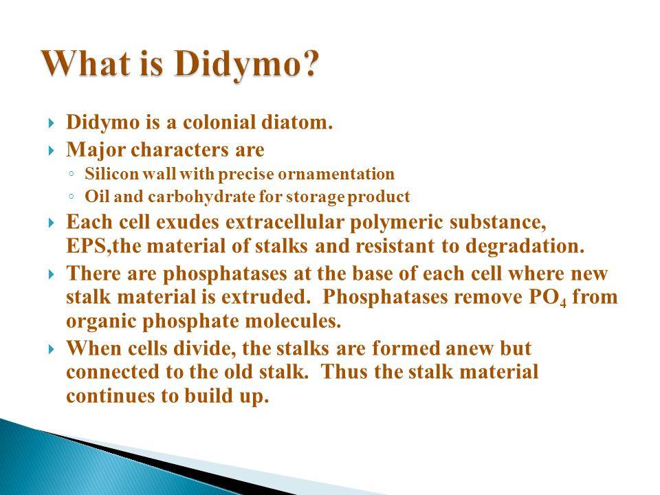 Didymo is a colonial diatom.